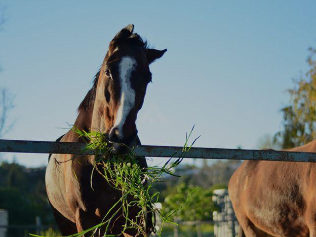 banner equestrian